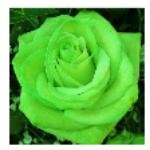 rose beunaise